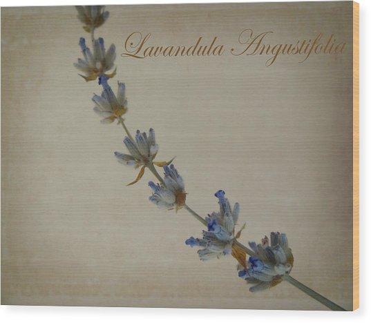 Lavandula Angustifolia Wood Print