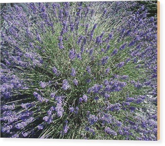 Lavender 2 Wood Print by Valerie Josi