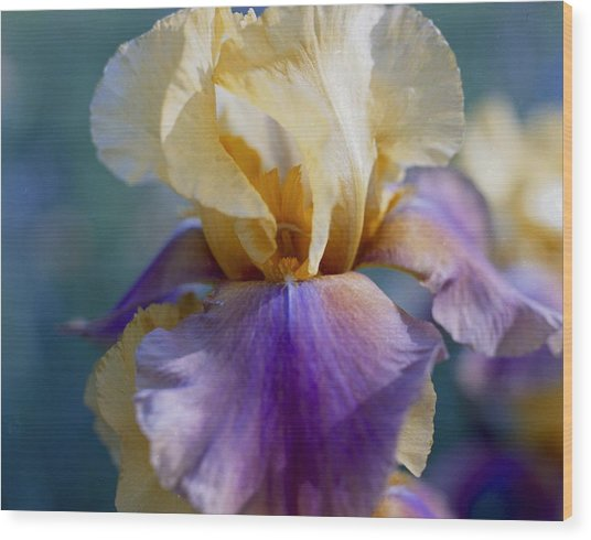 Lavender And Gold Iris Wood Print by George Ferrell