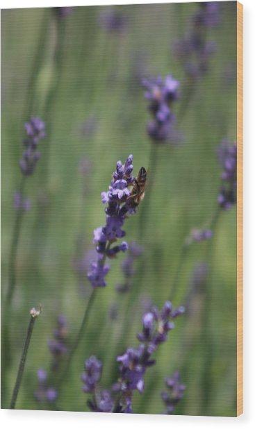 Lavender And Honey Bee Wood Print