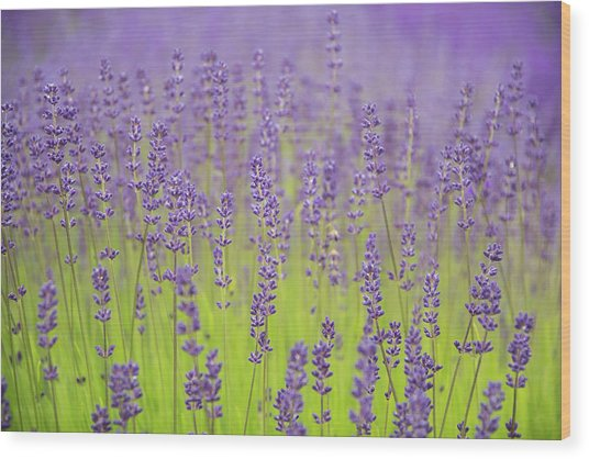 Wood Print featuring the photograph Lavender Fantasy by Jani Freimann