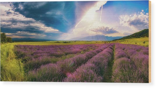 Lavender Field Panorama Wood Print
