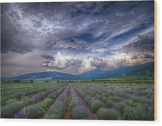Lavender Field Wood Print