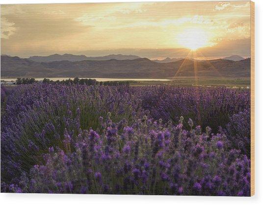 Lavender Glow Wood Print