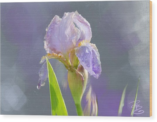 Lavender Iris In The Morning Sun Wood Print