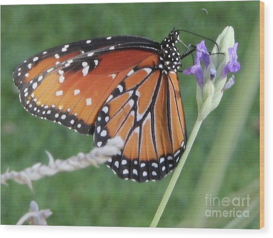 Lavender Lunch Wood Print