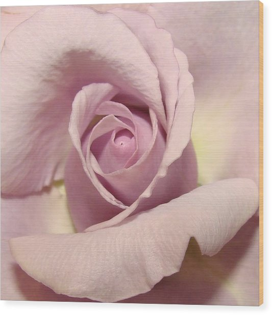 Lavender Mini Rose Wood Print by Liz Vernand