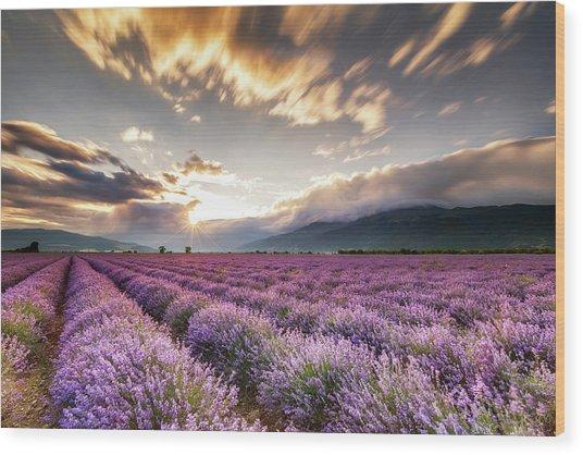 Lavender Sun Wood Print