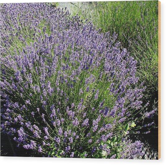Lavender  Wood Print by Valerie Josi
