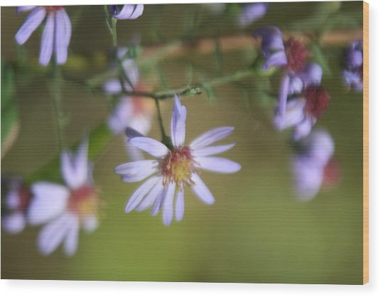 Lavender Wildflowers Wood Print by Gregory Jeffries