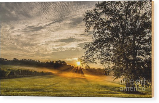 Lawn Sunrise Wood Print