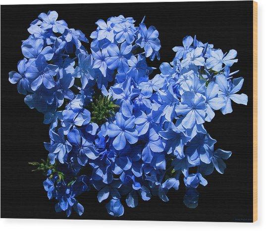 Lazy Blue Dazes Wood Print by Evelyn Patrick