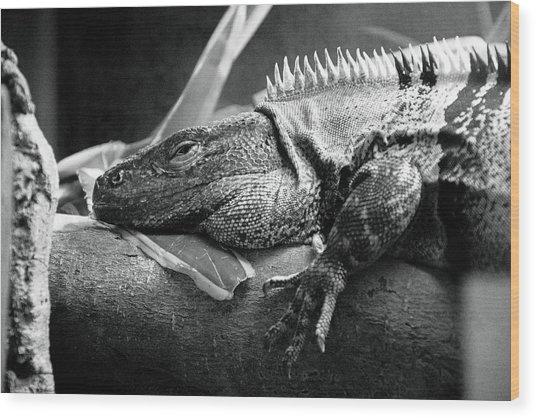 Lazy Lizard Wood Print