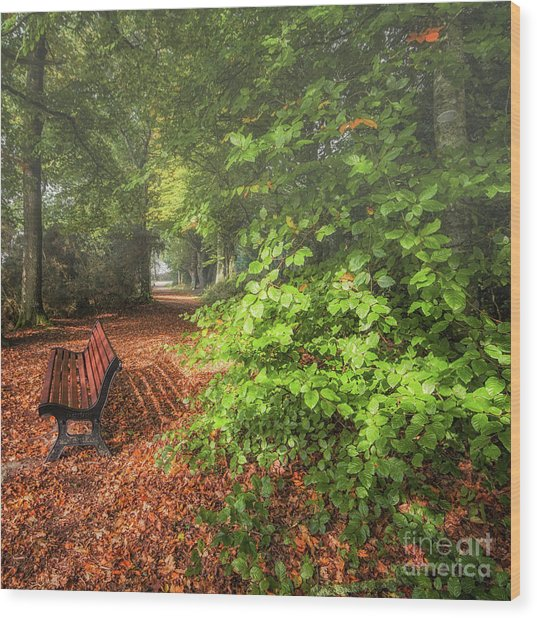 The Abbey's Bench Wood Print