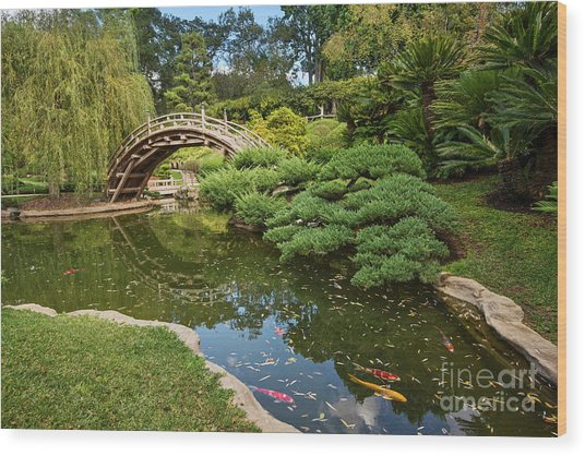 Lead The Way - The Beautiful Japanese Gardens At The Huntington Library With Koi Swimming. Wood Print