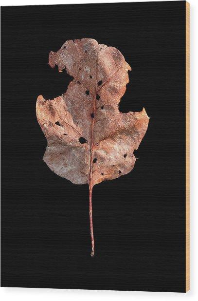 Leaf 24 Wood Print