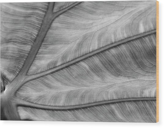 Leaf Abstraction Wood Print