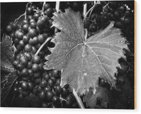 Leaf And Grapes In Black And White Wood Print