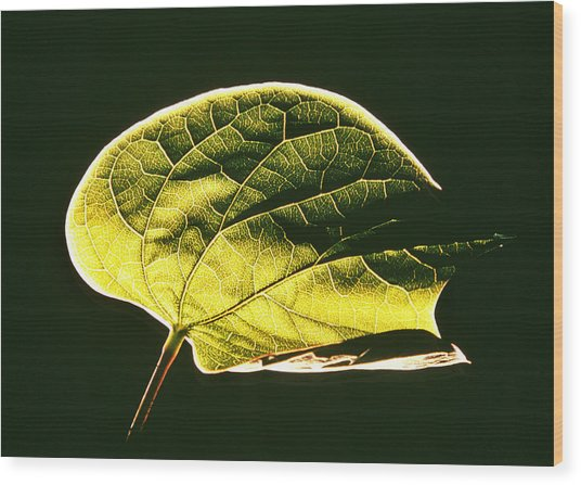 Leaf Detail Wood Print by Gerard Fritz
