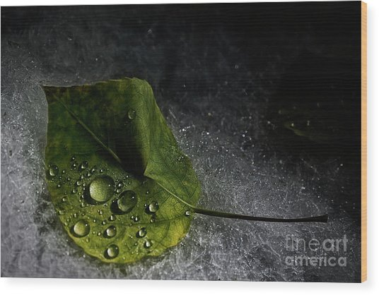 Leaf Droplets Wood Print