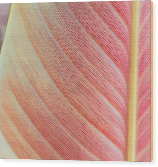 Leaf In Pink  Wood Print
