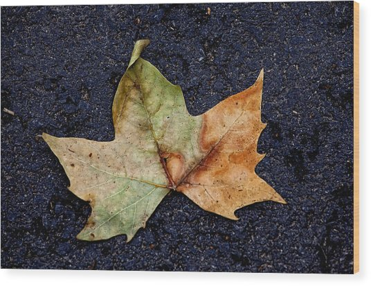 Leaf In The Road Wood Print by Robert Ullmann