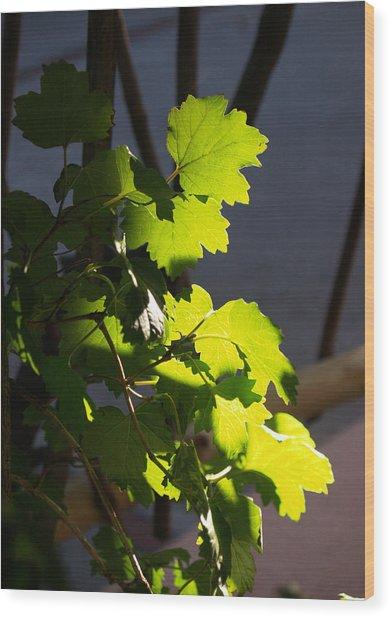 Leaf Light II Wood Print by James Granberry