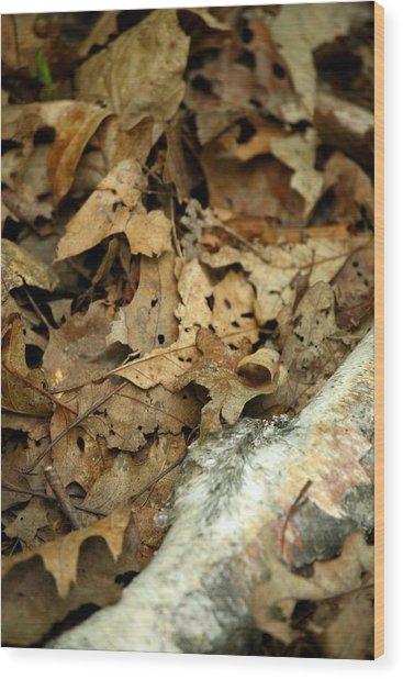 Leaf Litter Wood Print by Mark Platt