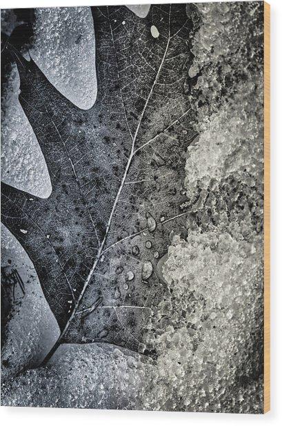 Leaf On Ice Wood Print