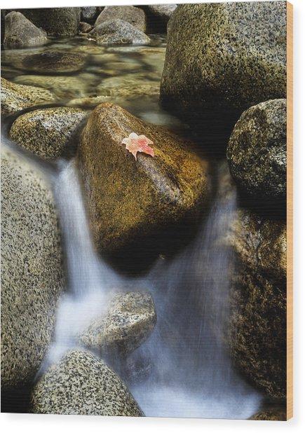 Leaf On Rock-yosemite Valley Wood Print