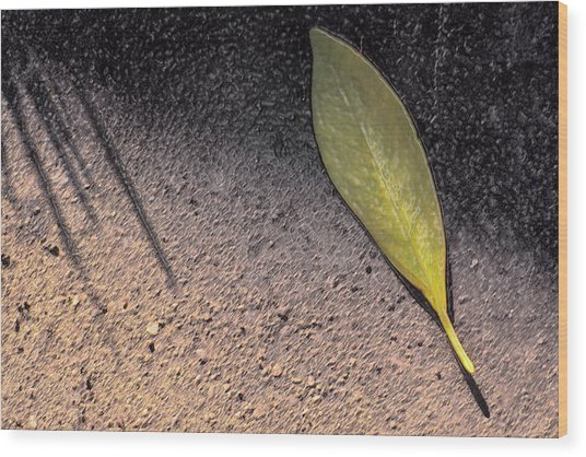 Leaf On Street Wood Print