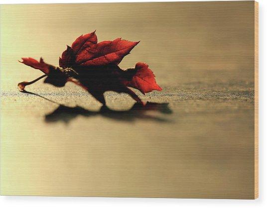 Leaf On The Garage Floor Wood Print