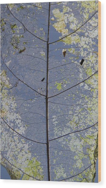 Wood Print featuring the photograph Leaf Structure by Debbie Cundy