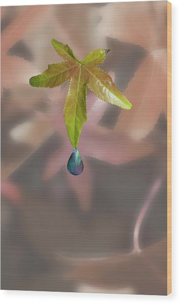 Leaf With Droplet Wood Print by Peter Hill