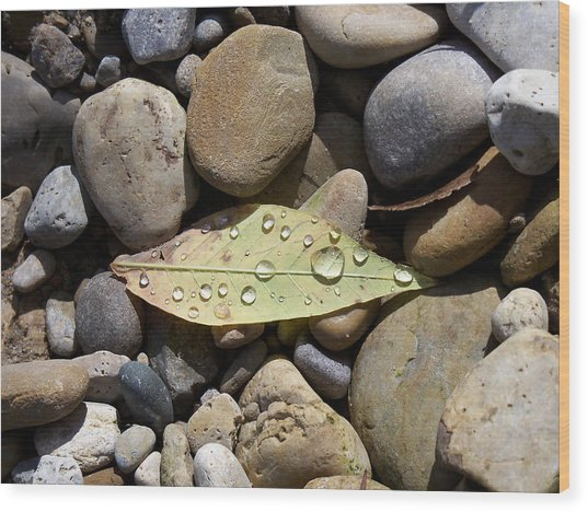 Leaf With Water Droplets In Rocks Wood Print