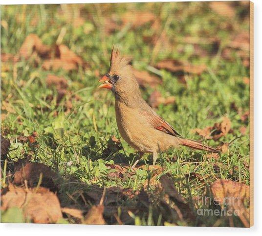 Leafy Cardinal Wood Print