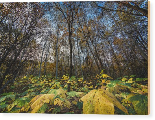 Leafy Yellow Forest Carpet Wood Print