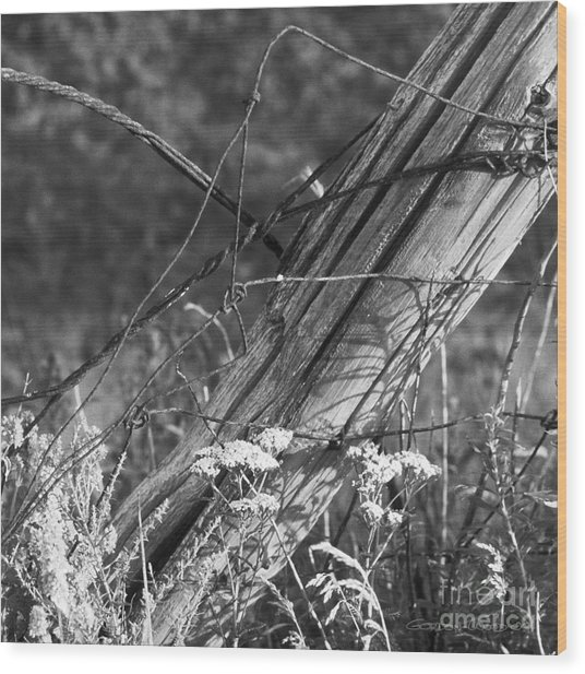 Leaning Farm Fence Post Amongst Weeds In Evening Sun Wood Print by Gordon Wood