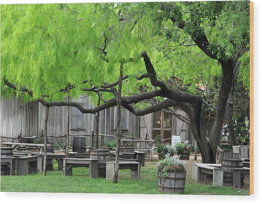 Leaning Tree Wood Print by Teresa Blanton