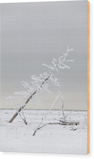 Leaning Tree Wood Print by Tim Grams