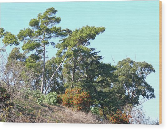 Leaning Trees On Hillside Wood Print