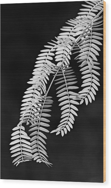 Leaves-1-st Lucia Wood Print