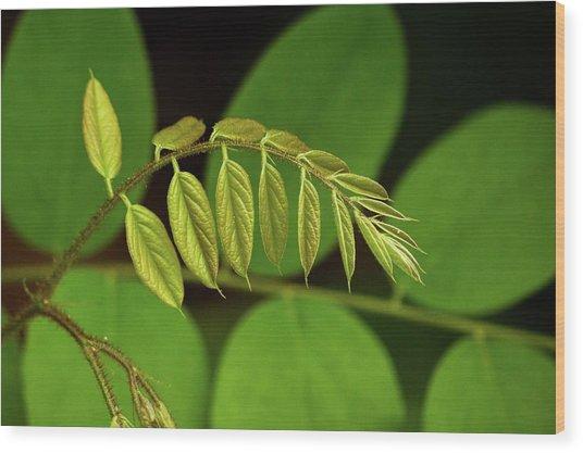 Leaves #1 Wood Print