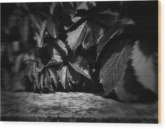 Leaves #9671 Wood Print
