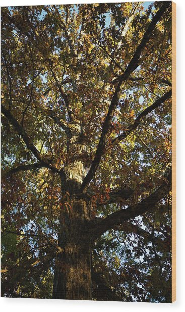 Leaves And Branches Wood Print