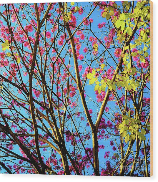 Wood Print featuring the photograph Leaves And Trees 980 by D Davila