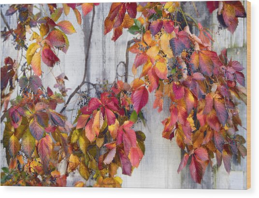 Leaves And Vines Wood Print by Donald Schwartz