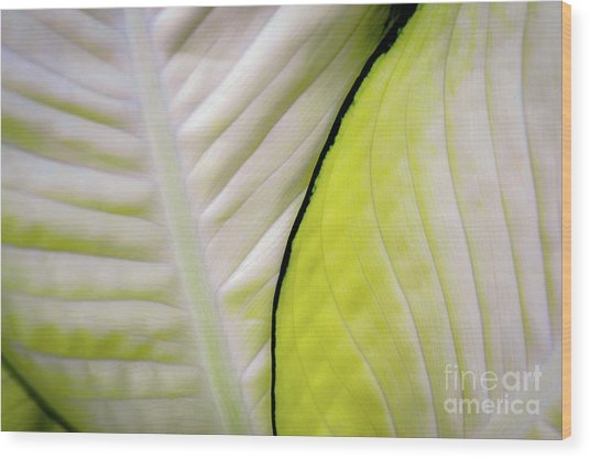 Leaves In White Wood Print