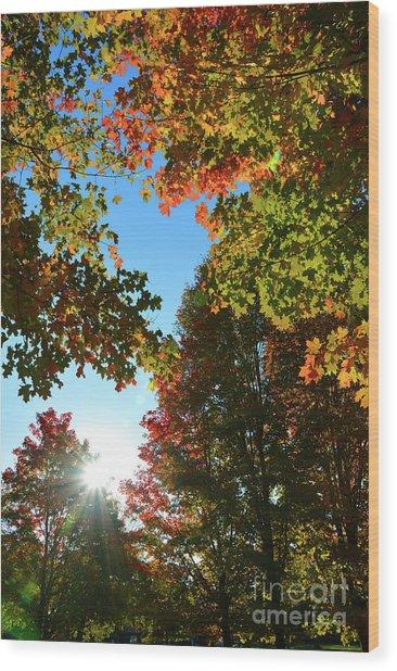 Leaves Of Change Wood Print