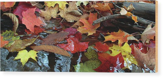 Leaves Of Color Wood Print